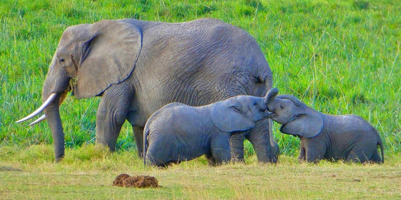 Amboselli-Elephant family